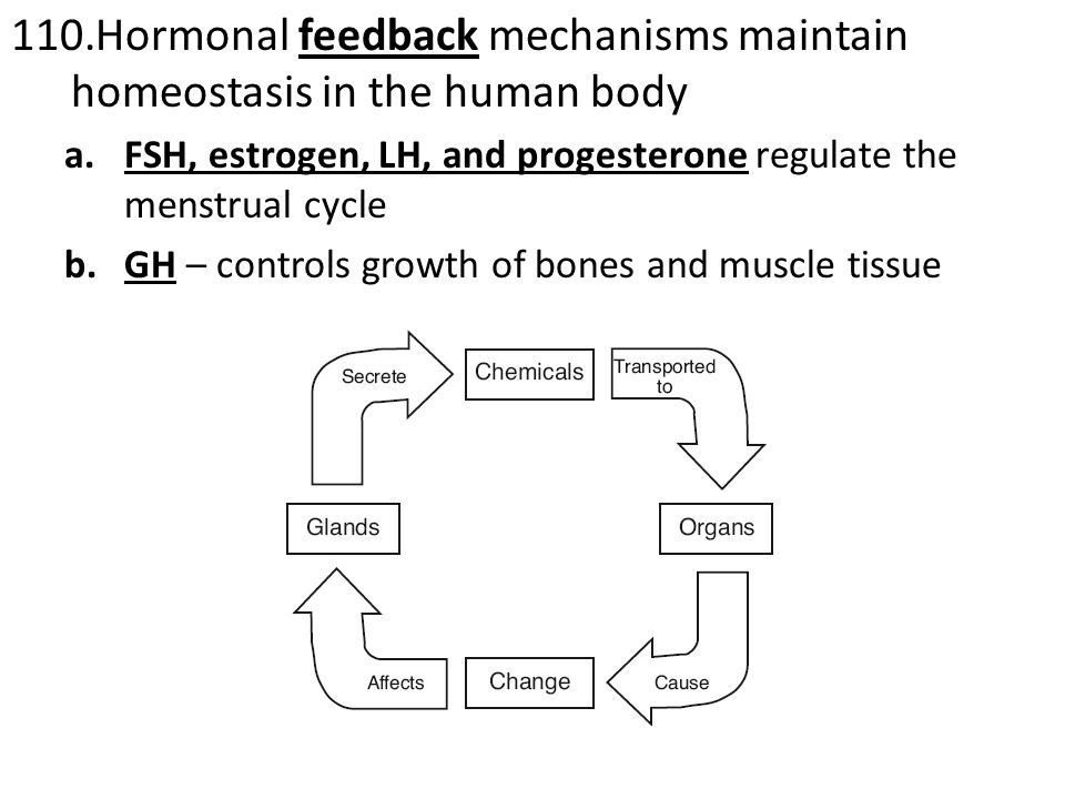 110.Hormonal feedback mechanisms maintain homeostasis in the human body a.FSH, estrogen, LH, and progesterone regulate the menstrual cycle b.GH – controls growth of bones and muscle tissue