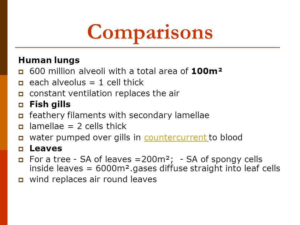 Comparisons Human lungs  600 million alveoli with a total area of 100m²  each alveolus = 1 cell thick  constant ventilation replaces the air  Fish gills  feathery filaments with secondary lamellae  lamellae = 2 cells thick  water pumped over gills in countercurrent to bloodcountercurrent  Leaves  For a tree - SA of leaves =200m²; - SA of spongy cells inside leaves = 6000m².gases diffuse straight into leaf cells  wind replaces air round leaves