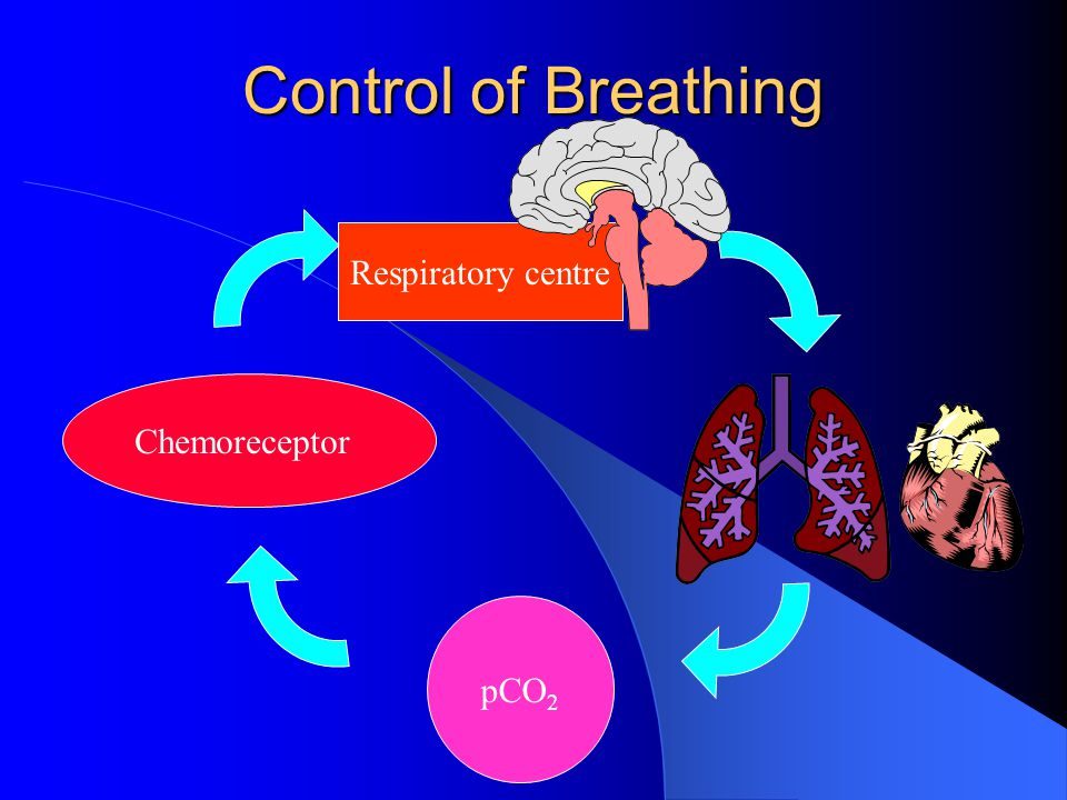 Control of Breathing Respiratory centre Chemoreceptor pCO 2
