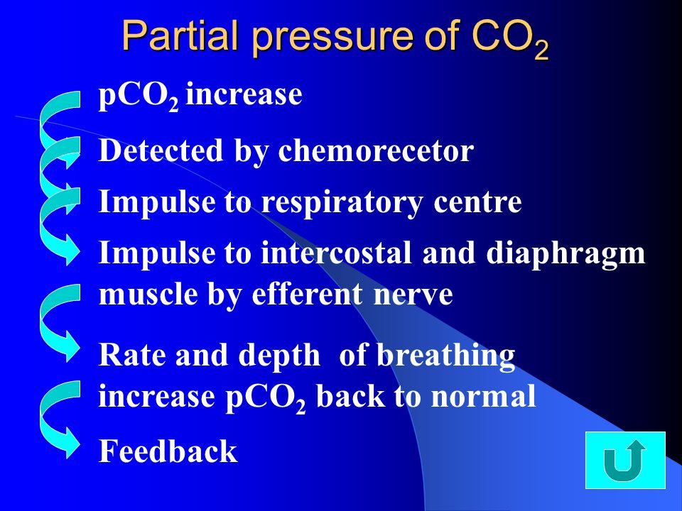 Partial pressure of CO 2 pCO 2 increase Detected by chemorecetor Impulse to respiratory centreImpulse to intercostal and diaphragm muscle by efferent nerve Rate and depth of breathing increase pCO 2 back to normal Feedback
