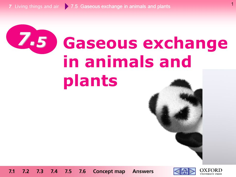 7.5 Gaseous exchange in animals and plants 2 Respiration Unbreathed air nitrogen (78%) oxygen (21%) carbon dioxide (0.03%)