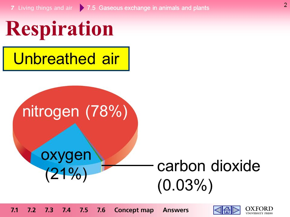 7.5 Gaseous exchange in animals and plants At the same time, the diaphragm becomes _________.