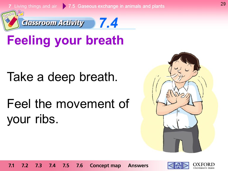 7.5 Gaseous exchange in animals and plants 29 7.4 Feeling your breath Take a deep breath. Feel the movement of your ribs.