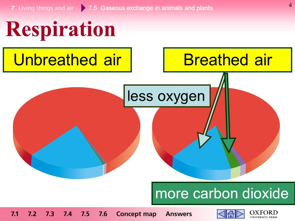 7.5 Gaseous exchange in animals and plants 95 The effect of the increasing amount of carbon dioxide in the atmosphere on us amount of carbon dioxide absorbed during photosynthesis drops large areas of forests are cleared