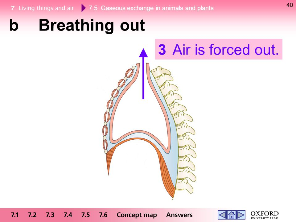 7.5 Gaseous exchange in animals and plants 40 bBreathing out 3Air is forced out.