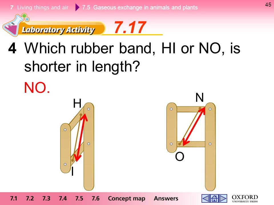 7.5 Gaseous exchange in animals and plants 45 4Which rubber band, HI or NO, is shorter in length? NO. H I N O 7.17