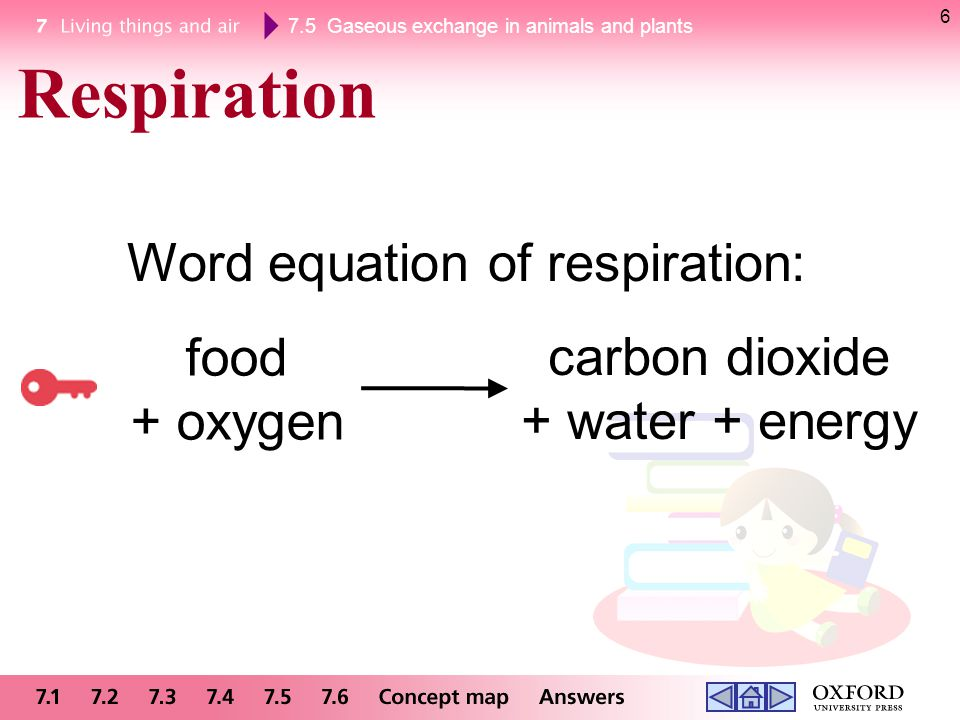 7.5 Gaseous exchange in animals and plants 6 food + oxygen carbon dioxide + water + energy Respiration Word equation of respiration: