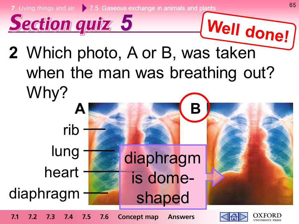 7.5 Gaseous exchange in animals and plants lung 2Which photo, A or B, was taken when the man was breathing out? Why? 655 AB rib heart diaphragm diaphr