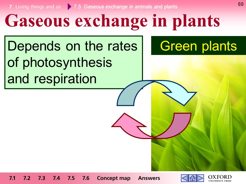 7.5 Gaseous exchange in animals and plants 69 Gaseous exchange in plants Green plants Depends on the rates of photosynthesis and respiration