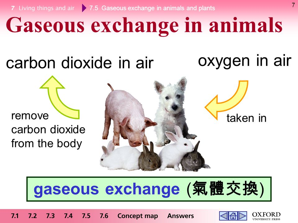 7.5 Gaseous exchange in animals and plants 7 Gaseous exchange in animals gaseous exchange ( 氣體交換 ) oxygen in air carbon dioxide in air taken in remove