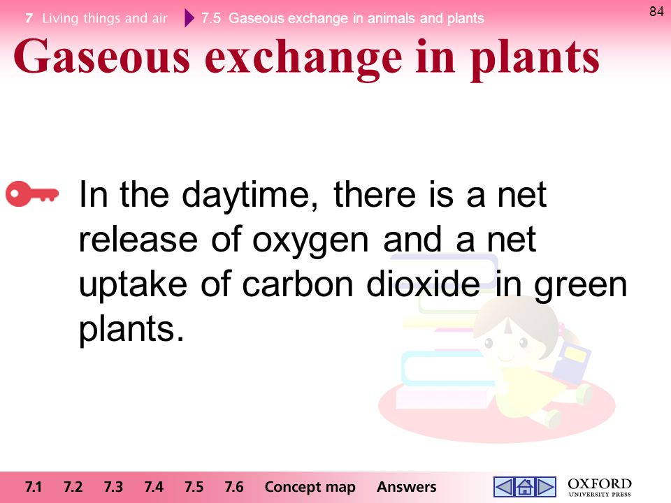 7.5 Gaseous exchange in animals and plants 84 In the daytime, there is a net release of oxygen and a net uptake of carbon dioxide in green plants. Gas