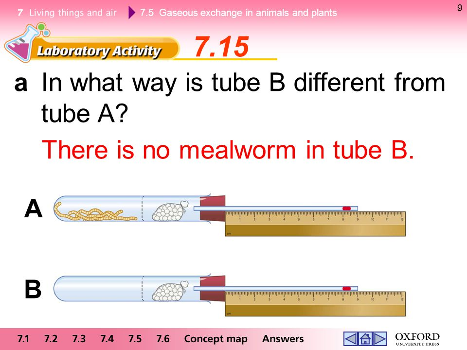 7.5 Gaseous exchange in animals and plants 9 7.15 aIn what way is tube B different from tube A? There is no mealworm in tube B. A B
