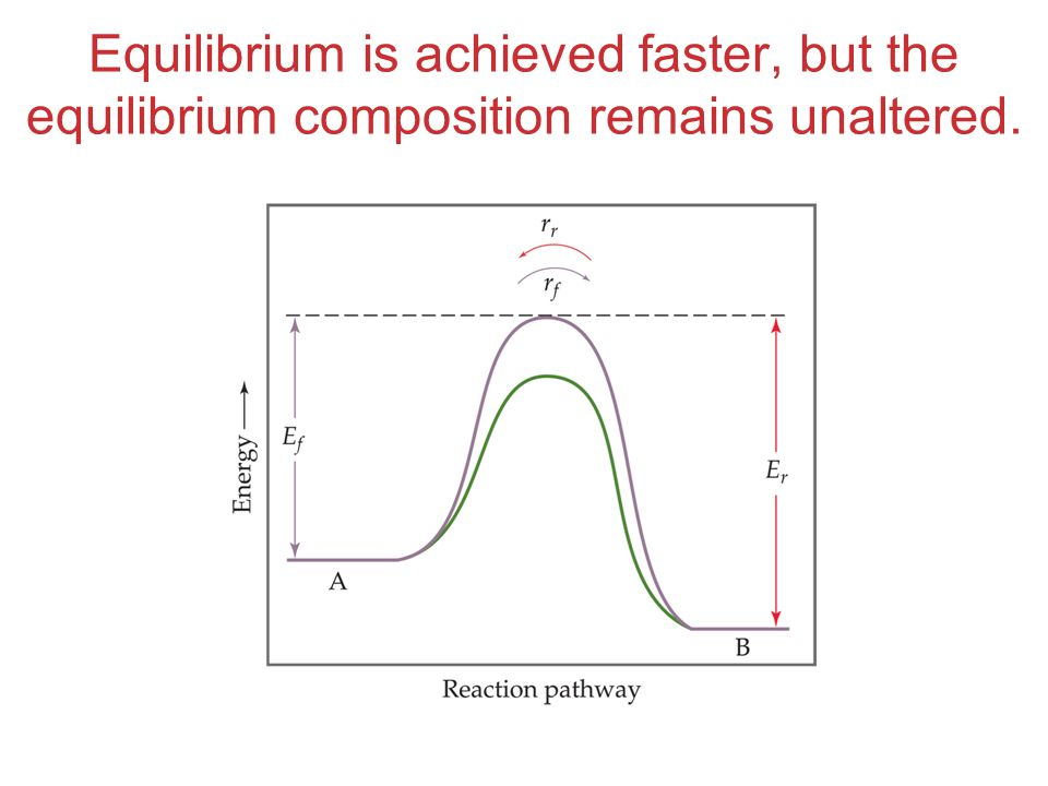 Equilibrium is achieved faster, but the equilibrium composition remains unaltered.