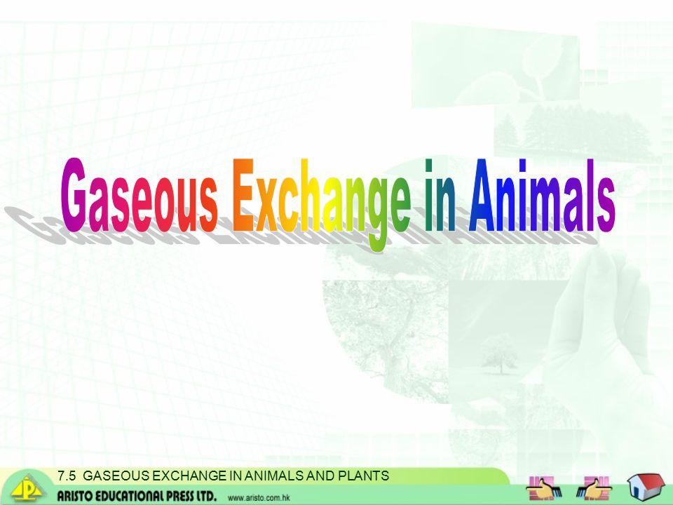 7.5 GASEOUS EXCHANGE IN ANIMALS AND PLANTS Gaseous exchange in plants