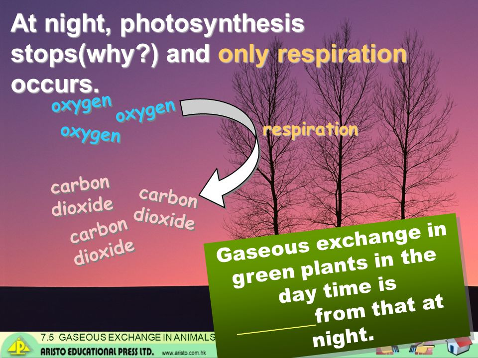 7.5 GASEOUS EXCHANGE IN ANIMALS AND PLANTS At night, photosynthesis stops(why?) and only respiration occurs.