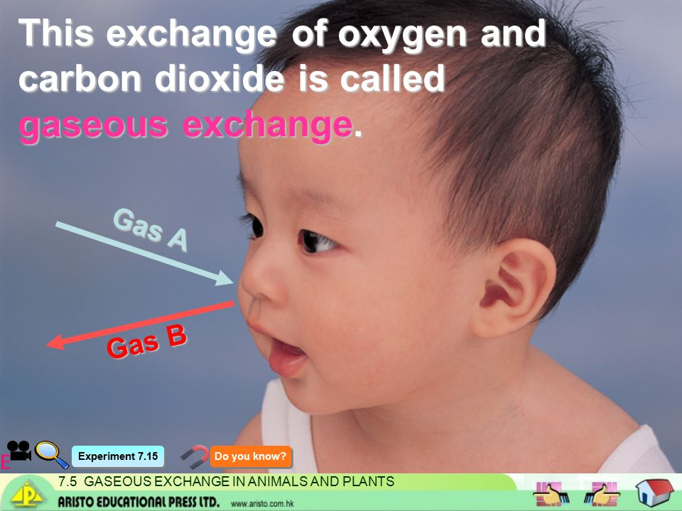 7.5 GASEOUS EXCHANGE IN ANIMALS AND PLANTS Explain the results in tube A.