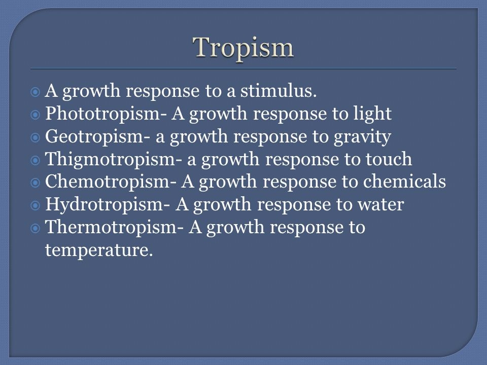  A growth response to a stimulus.