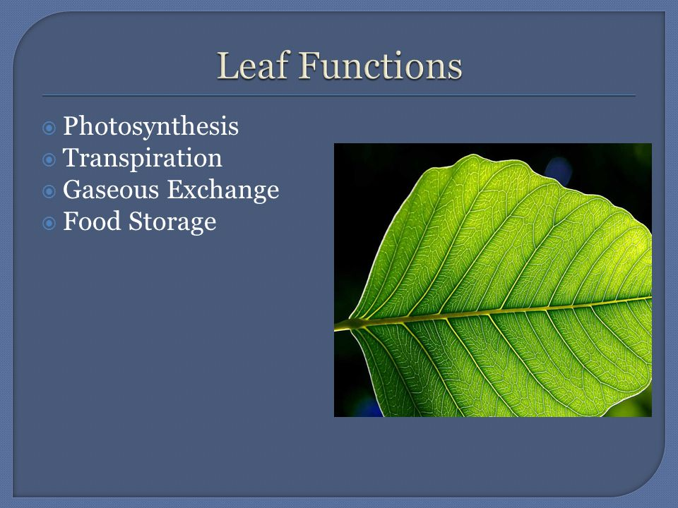  Photosynthesis  Transpiration  Gaseous Exchange  Food Storage