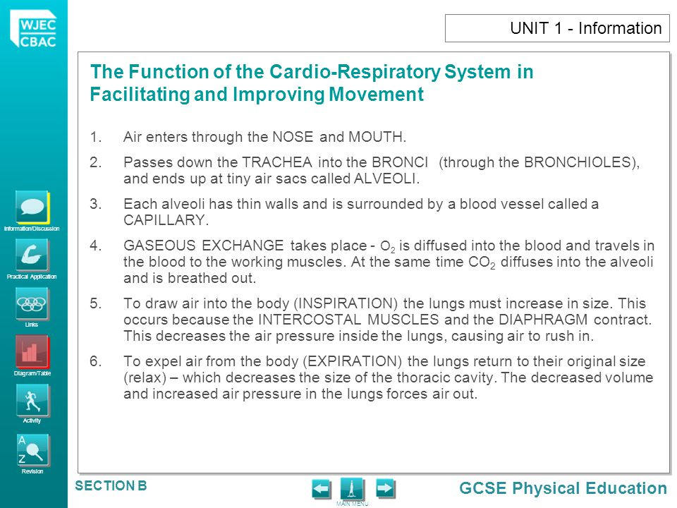Information/Discussion Practical Application Links Diagram/Table Activity Revision GCSE Physical Education The Function of the Cardio-Respiratory System in Facilitating and Improving Movement MAIN MENU SECTION B UNIT 1 - Activity Every cell in the body needs to _____________ or it will die.
