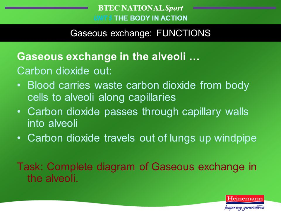 BTEC NATIONAL Sport UNIT 5 THE BODY IN ACTION Gaseous exchange: FUNCTIONS Gaseous exchange in the alveoli … Carbon dioxide out: Blood carries waste carbon dioxide from body cells to alveoli along capillaries Carbon dioxide passes through capillary walls into alveoli Carbon dioxide travels out of lungs up windpipe Task: Complete diagram of Gaseous exchange in the alveoli.