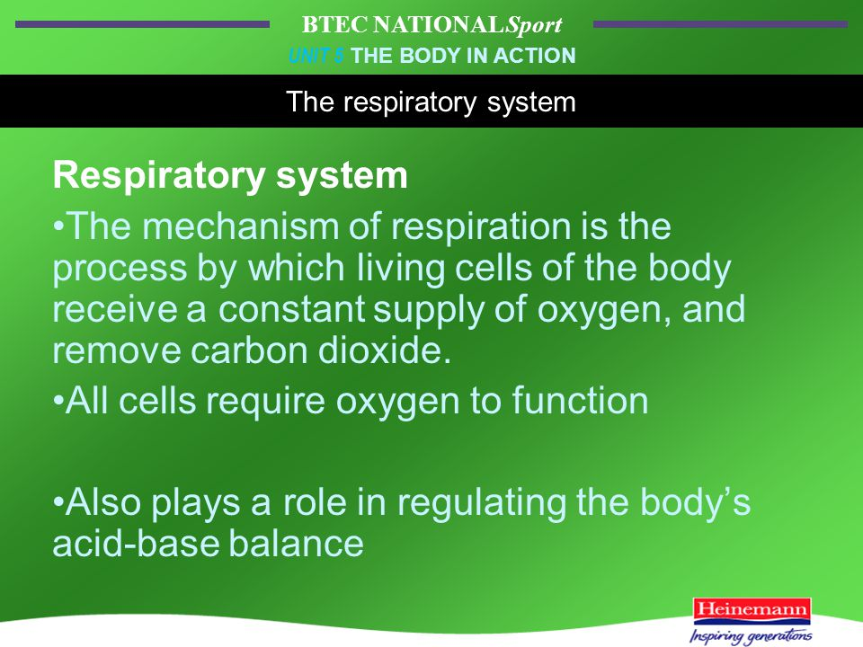 BTEC NATIONAL Sport UNIT 5 THE BODY IN ACTION The respiratory system Respiratory system The mechanism of respiration is the process by which living cells of the body receive a constant supply of oxygen, and remove carbon dioxide.