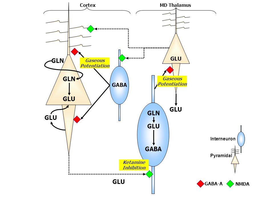 GABA GLU GLN GLU GLN GLU GLN Interneuron Pyramidal GABA GABA-A NMDA CortexMD Thalamus Gaseous Potentiation Ketamine Inhibition mpg