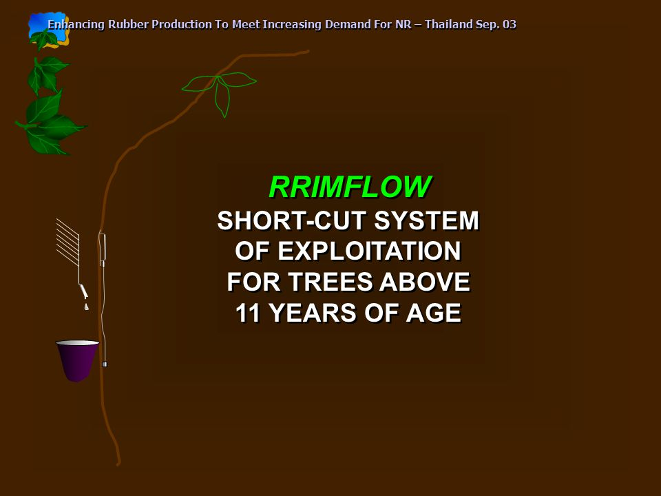 RRIMFLOW SHORT-CUT SYSTEM OF EXPLOITATION FOR TREES ABOVE 11 YEARS OF AGE RRIMFLOW SHORT-CUT SYSTEM OF EXPLOITATION FOR TREES ABOVE 11 YEARS OF AGE Enhancing Rubber Production To Meet Increasing Demand For NR – Thailand Sep.