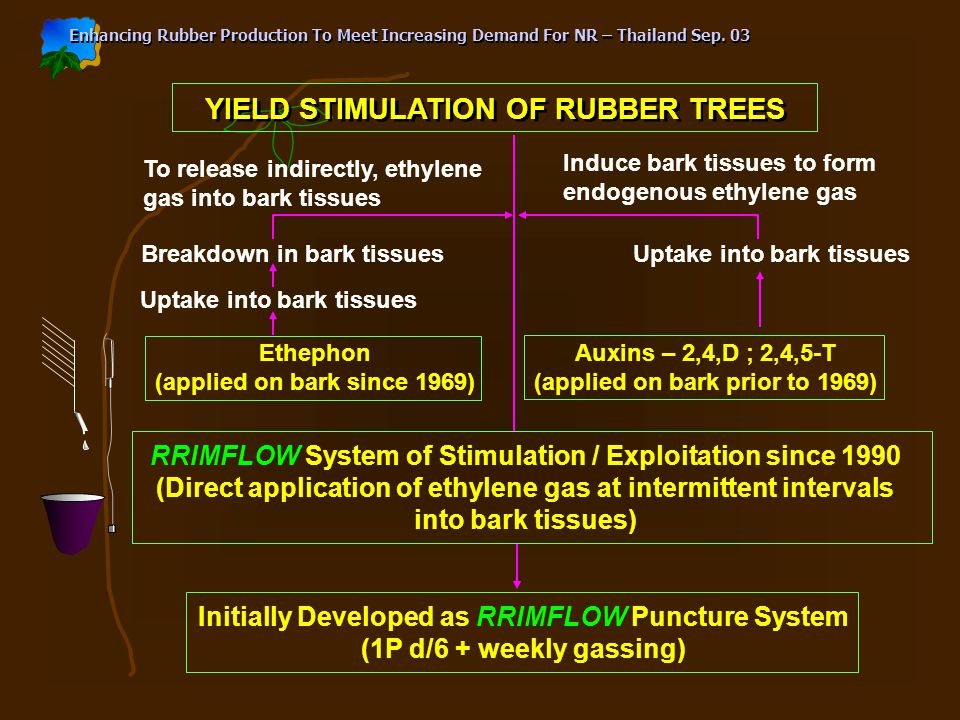 YIELD STIMULATION OF RUBBER TREES To release indirectly, ethylene gas into bark tissues Induce bark tissues to form endogenous ethylene gas Breakdown in bark tissues Uptake into bark tissues Ethephon (applied on bark since 1969) Uptake into bark tissues Auxins – 2,4,D ; 2,4,5-T (applied on bark prior to 1969) RRIMFLOW System of Stimulation / Exploitation since 1990 (Direct application of ethylene gas at intermittent intervals into bark tissues) Initially Developed as RRIMFLOW Puncture System (1P d/6 + weekly gassing)