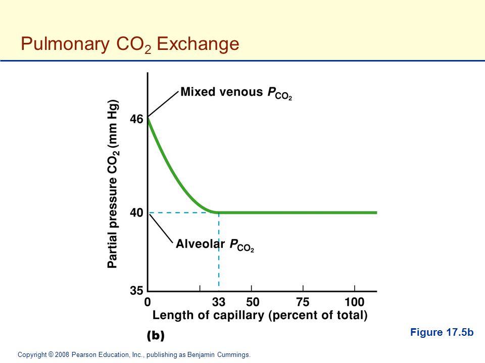 Copyright © 2008 Pearson Education, Inc., publishing as Benjamin Cummings. Pulmonary CO 2 Exchange Figure 17.5b