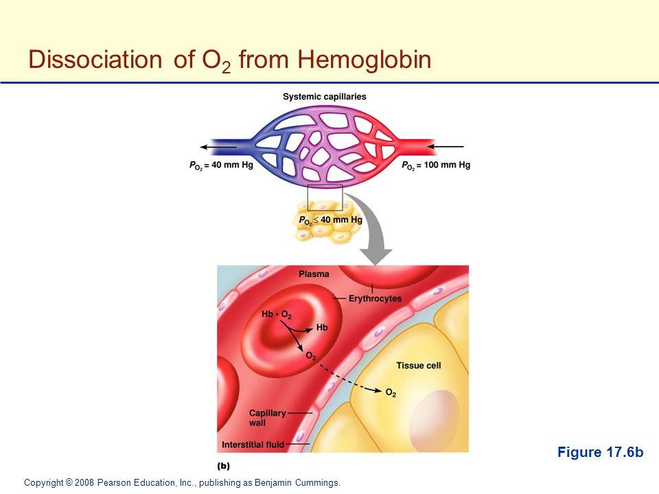 Copyright © 2008 Pearson Education, Inc., publishing as Benjamin Cummings. Dissociation of O 2 from Hemoglobin Figure 17.6b