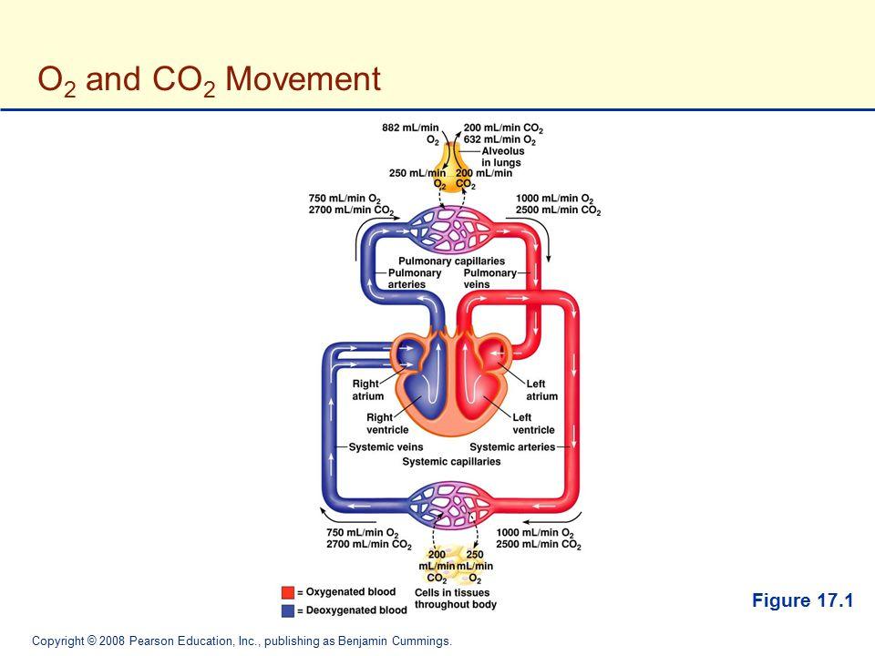 Copyright © 2008 Pearson Education, Inc., publishing as Benjamin Cummings. O 2 and CO 2 Movement Figure 17.1