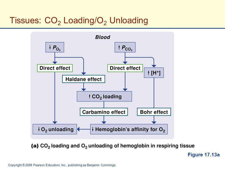 Copyright © 2008 Pearson Education, Inc., publishing as Benjamin Cummings. Figure 17.13a Tissues: CO 2 Loading/O 2 Unloading