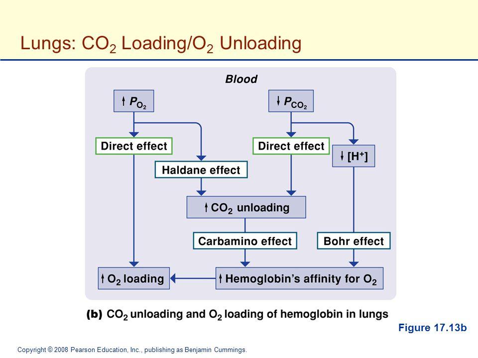 Copyright © 2008 Pearson Education, Inc., publishing as Benjamin Cummings. Figure 17.13b Lungs: CO 2 Loading/O 2 Unloading