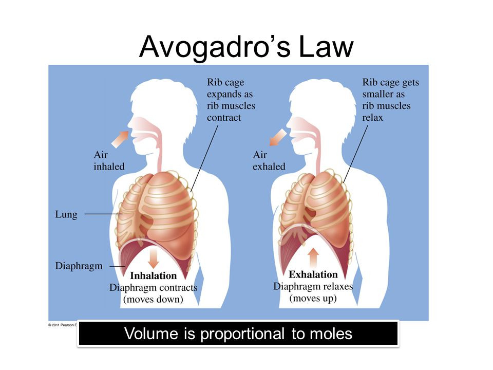 Avogadro's Law Volume is proportional to moles