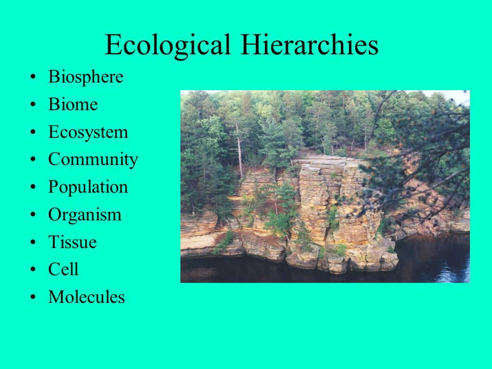 Definitions Biosphere - The entire portion of the globe that can support life, including the atmosphere, oceans, terrestrial surface and belowground Biome – The largest easily recognized subsection of the biosphere, based upon climate