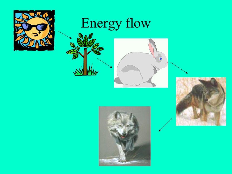 Energy Flow Solar Energy Producers Herbivores Carnivores Top Carnivore 1 % 10% Consumers Calories 10,000 1,000 100 10 1,000,000