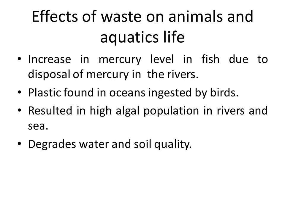 Effects of waste on animals and aquatics life Increase in mercury level in fish due to disposal of mercury in the rivers. Plastic found in oceans inge