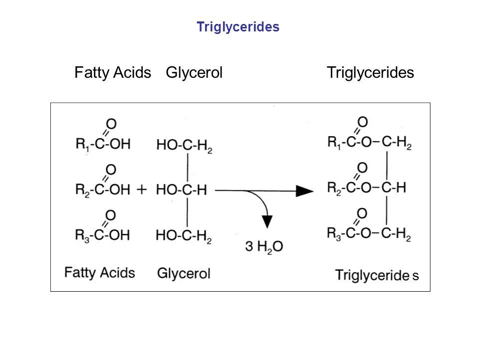 Fatty Acids Glycerol Triglycerides Triglycerides s