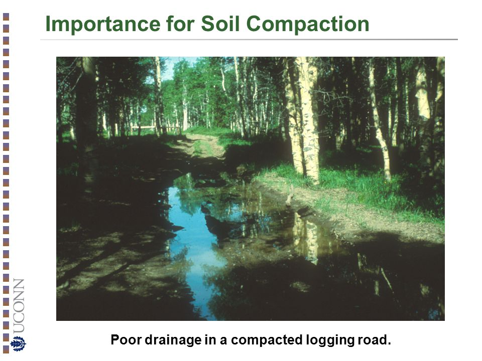 Importance for Soil Compaction Poor drainage in a compacted logging road.