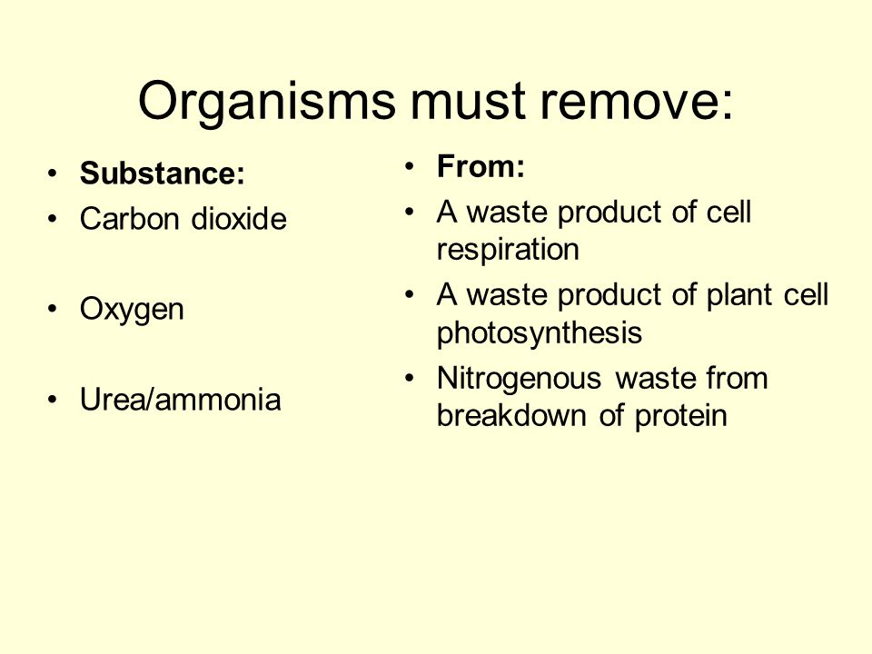Organisms must remove: Substance: Carbon dioxide Oxygen Urea/ammonia From: A waste product of cell respiration A waste product of plant cell photosynt