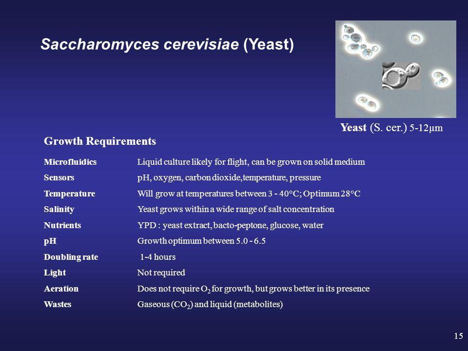 15 Yeast (S.