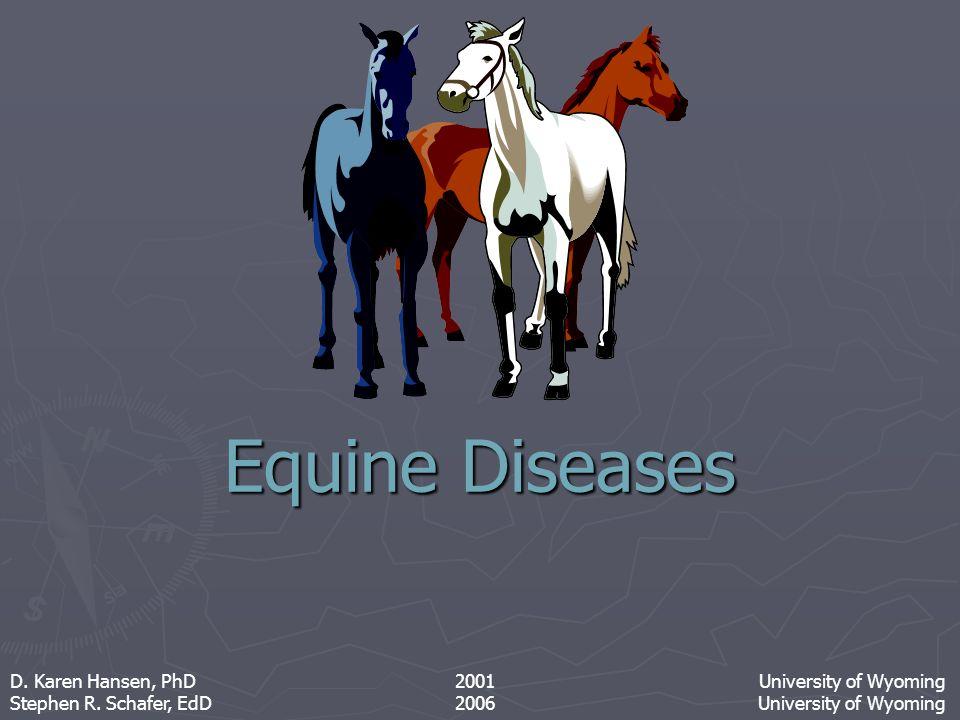 Chronic Obstructive Pulmonary Disease (Heaves) Drawing: Equus
