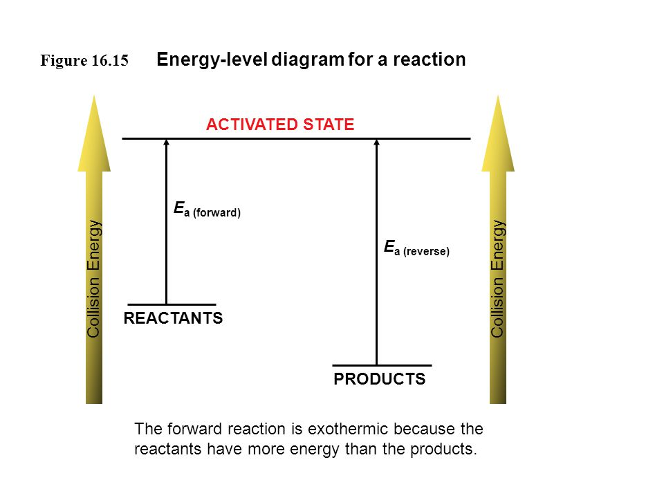 Figure 16.15 Energy-level diagram for a reaction REACTANTS PRODUCTS ACTIVATED STATE Collision Energy E a (forward) E a (reverse) The forward reaction