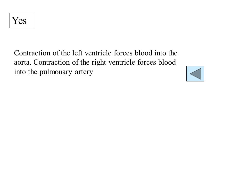 Yes Contraction of the left ventricle forces blood into the aorta.