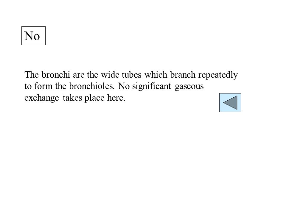 No The bronchi are the wide tubes which branch repeatedly to form the bronchioles.