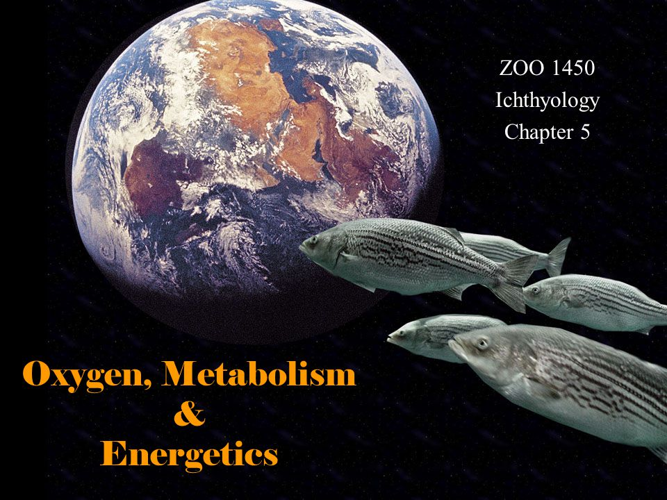 Oxygen, Metabolism & Energetics ZOO 1450 Ichthyology Chapter 5