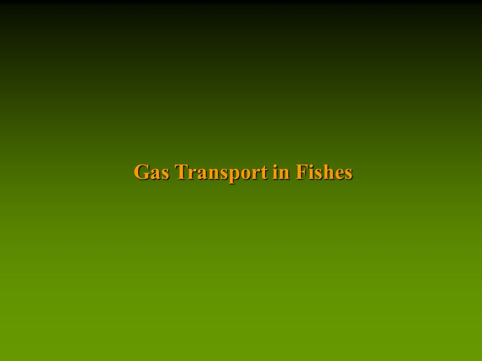 Gas Transport in Fishes
