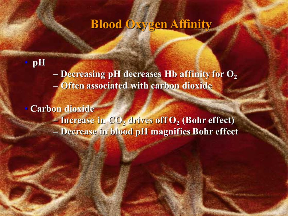 Blood Oxygen Affinity pH – Decreasing pH decreases Hb affinity for O 2 – Often associated with carbon dioxide Carbon dioxide – Increase in CO 2 drives off O 2 (Bohr effect) – Decrease in blood pH magnifies Bohr effect Carbon dioxide – Increase in CO 2 drives off O 2 (Bohr effect) – Decrease in blood pH magnifies Bohr effect
