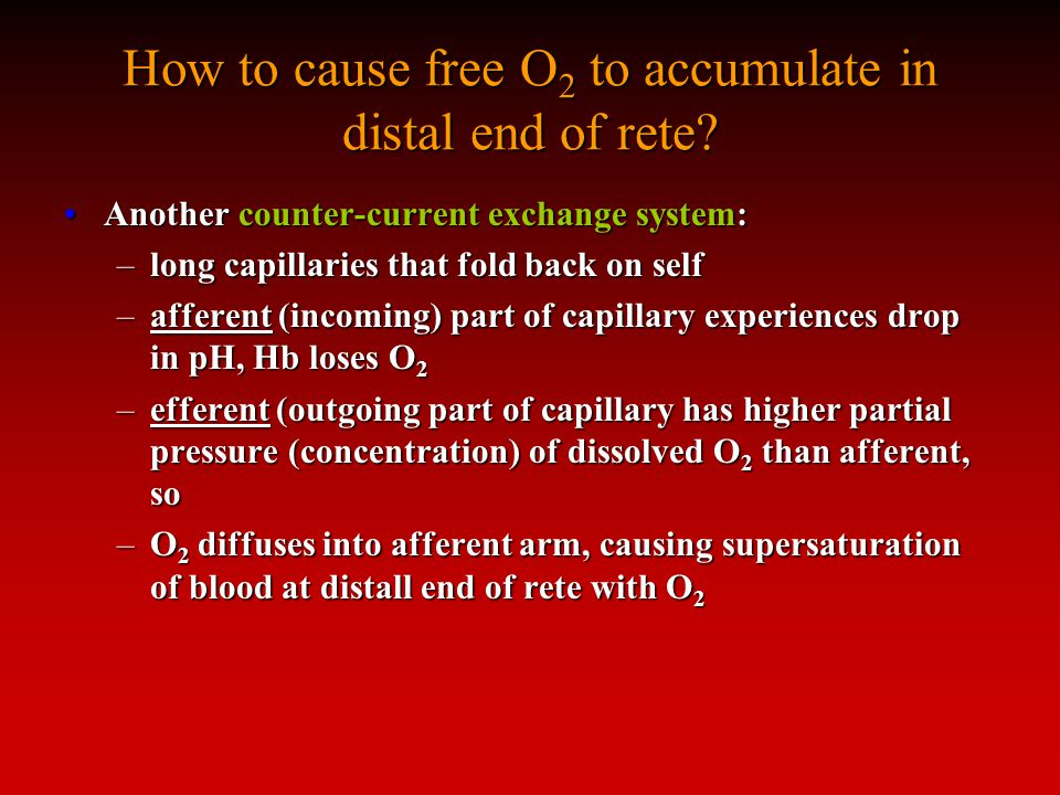 How to cause free O 2 to accumulate in distal end of rete.