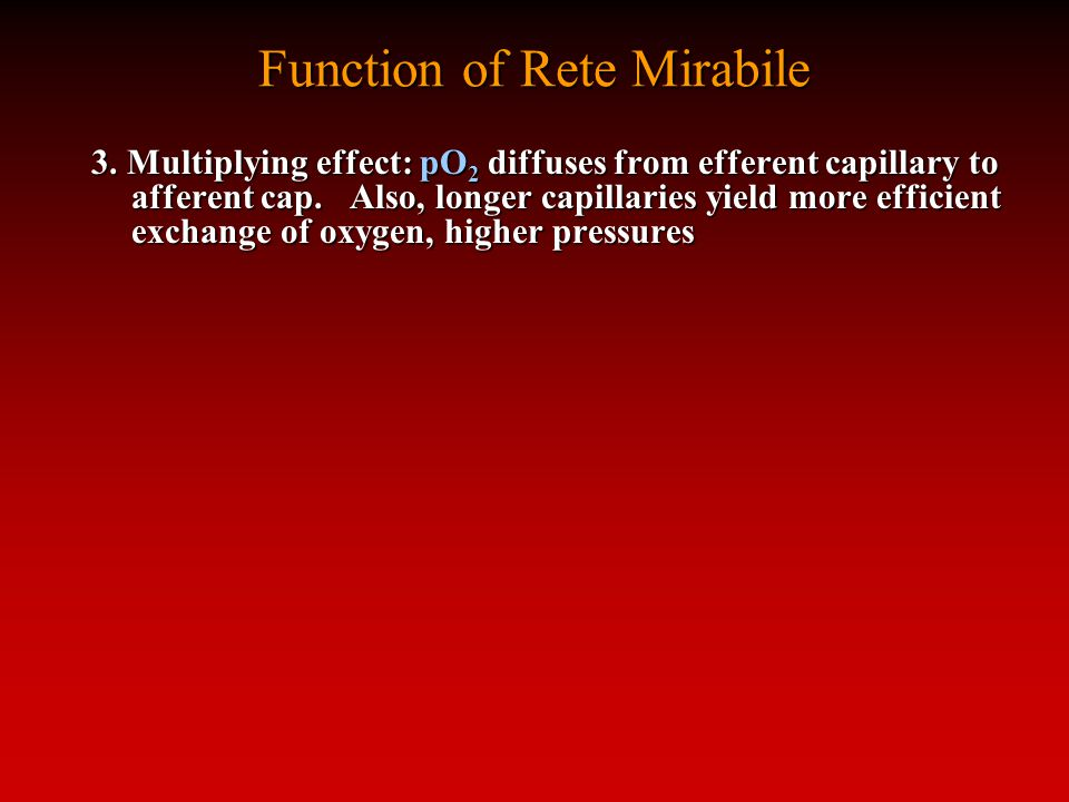 Function of Rete Mirabile 3.